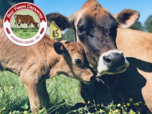 cows at nice farms